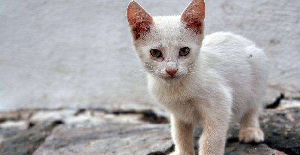 Katzen Online Kaufen